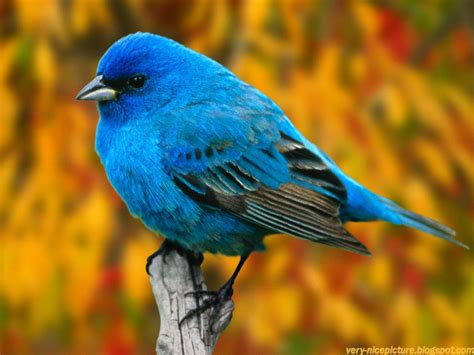 nice wallpapers birds wallpapers natural wallpapers