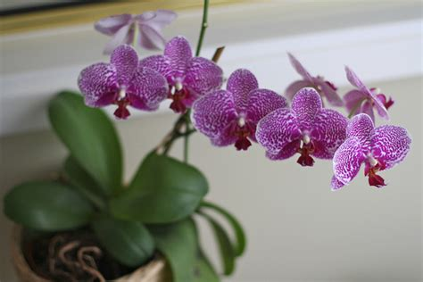 home depot canada buy two orchids get one free printable coupon canadian freebies coupons