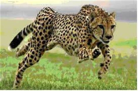 imagenes de animales vertebrados mamiferos animales vertebrados almaquiroz