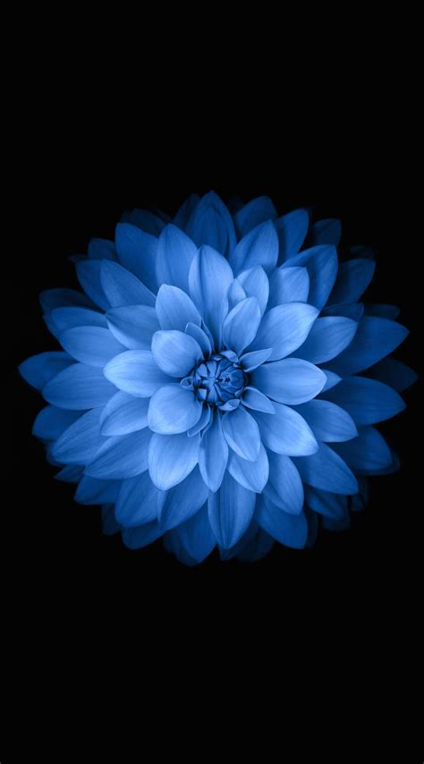 bunga wallpaper iphone 6 blue black flower wallpaper sc iphone6splus