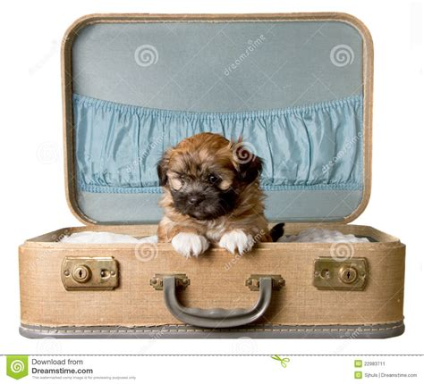 puppy suitcase puppy in a vintage suitcase stock image image 22983711