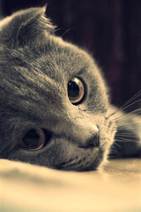 graue katze gesicht close  iphone xgs
