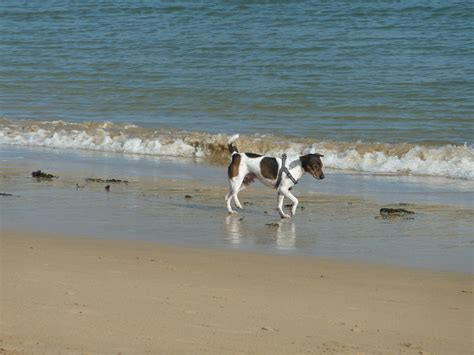 beaches that allow dogs great padstow walks friendly padstow beaches