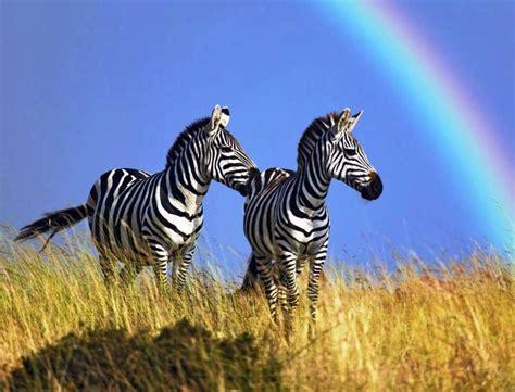 amazing pictures  africa