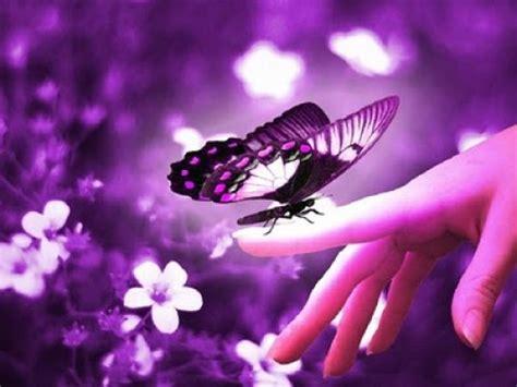 imágenes atrevidas y tiernas im 225 genes lindas de mariposas