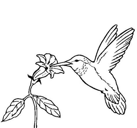 disegno di un fiore disegno di colibr 236 con un fiore da colorare acolore