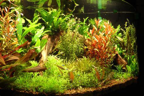 plants for tropical aquarium aquarium plants gravel fish n tips aquatic plants 2017