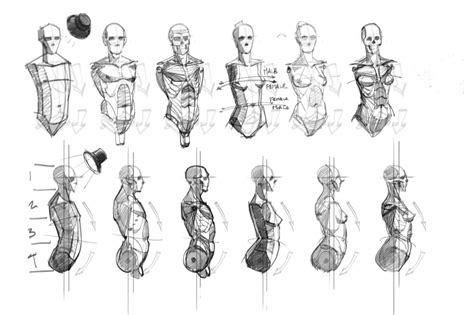 helpful art reference bourgasm tadaaa drawing the body