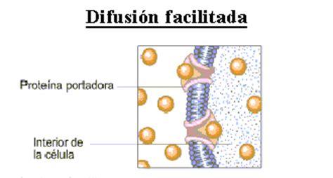 imagenes que se mueven de luto activo membrana