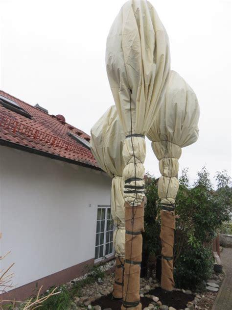 winterschutz palmen www ecopalms de frostschutz winterschutz palmen u
