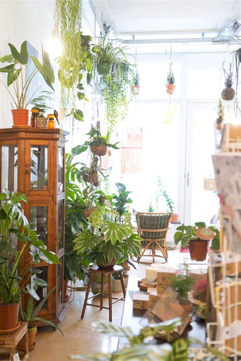Ixxi Den Bosch by Stunning Joelixcom Oerwoud Plant Shop In Den Bosch The