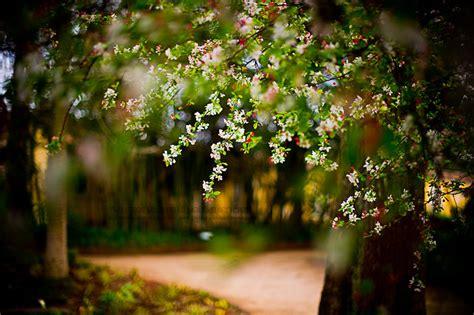 good morning spring lovers  love  fruit trees flickr