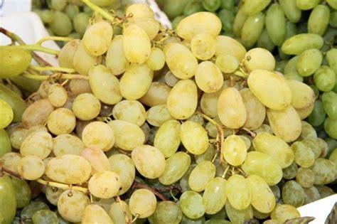 uva da tavola nomi chicchi dolci e colorati l uva da tavola dalla a alla z