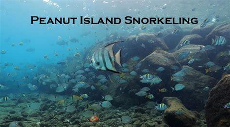 peanut island snorkeling riviera beach snorkel