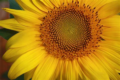 ace  fibonacci sequence interview question