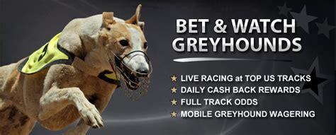 greyhound racing betting   track betting