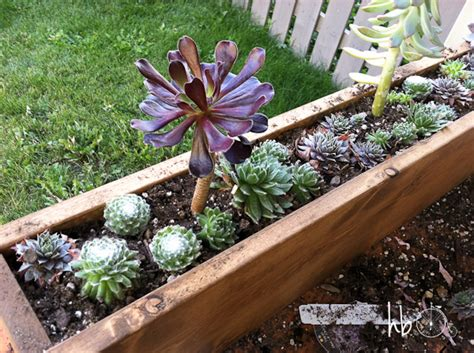 succulent window box how to make a succulent window box hometalk