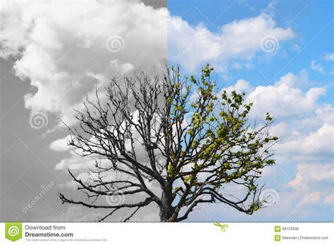 alive tree half tree 28 images kunstkerstboom dakota half 210 cm