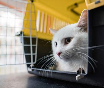 can you train a cat to go outside for bathroom teach your cat to go into her crate on command
