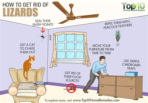 how to get rid of lizards in your house how to get rid of lizards top 10 home remedies