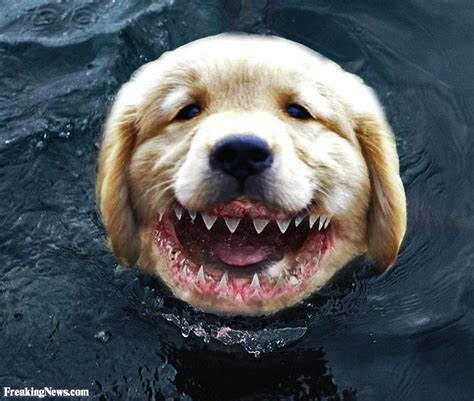 puppy news shark teeth pictures freaking news