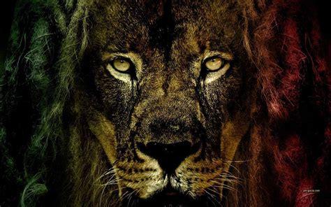 imagenes rasta wallpaper rasta lion wallpapers wallpaper cave