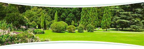 Tree And Shrub Care Program Pro Turf Lawn Service Pro Turf Landscaping