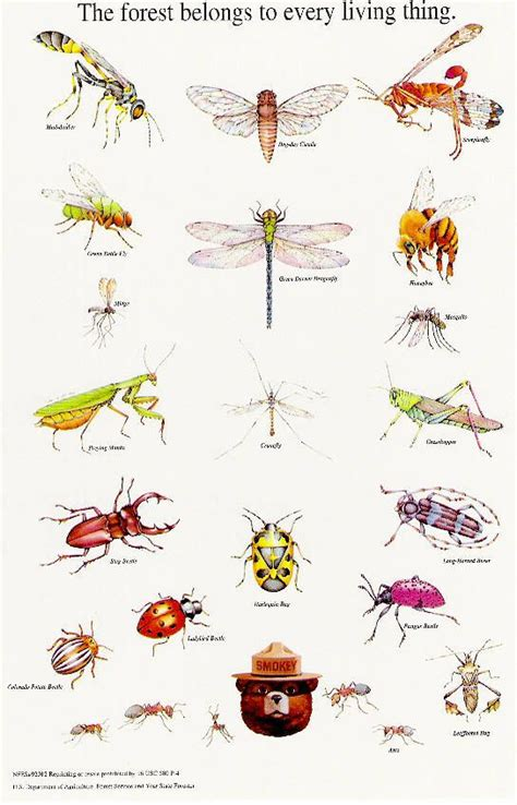 garden insects of america the ultimate guide to backyard bugs books the world s catalog of ideas