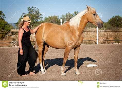 horse outside young woman training horse outside in summer stock image