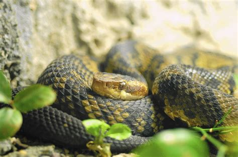 how to find snakes in your backyard snakes in your yard can be a healthy thing especially if