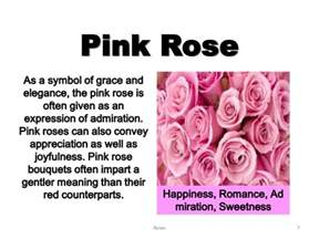meaning of pink meanings of roses weneedfun