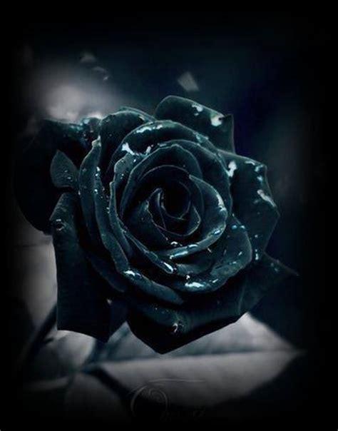 imagenes goticas de rosas negras soledad gotica rosas goticas