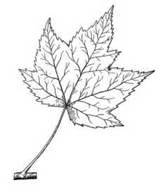 ausmalbild rotahornblatt ausmalbilder kostenlos zum ausdrucken
