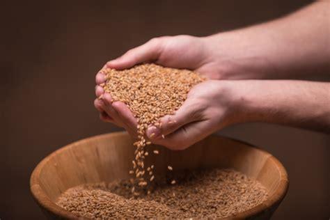 whole grains ibs 7 5 lbs whole grain organic einkorn ancientgrains