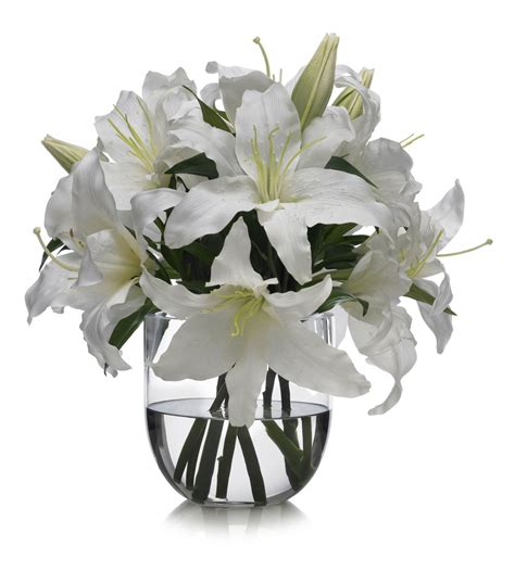 flores para el dia del padre casablanca lily meaning of happiness and celebrations