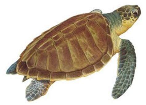 imagenes de animales vertebrados reptiles animales vertebrados sitiodemariangeles