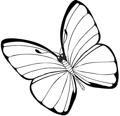 butterfly coloring pages free printable pictures