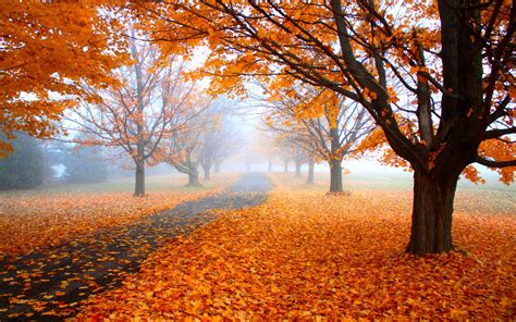nature landscape morning mist fall road trees