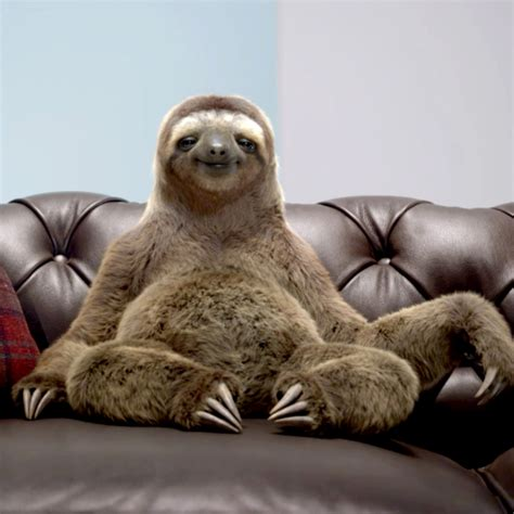 sloth on a couch neal the sloth the ad mascot wiki fandom powered by wikia