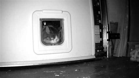 cat garage door cat mate elite flap door installed in garage