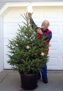enjoy a living christmas tree for years to come msu