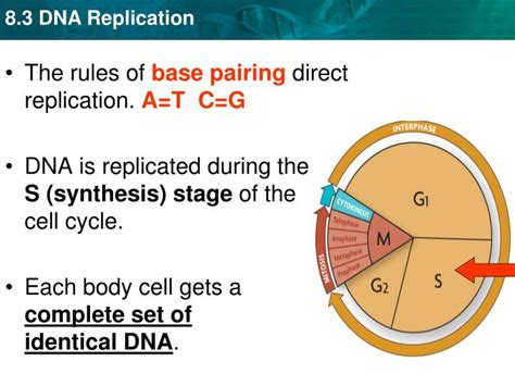 explain how dna serves as its own template during replication ppt complete the two dna sequences below t a c