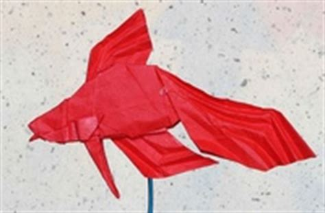 origami betta fish siamese fighting fish robert j lang gilad s origami page