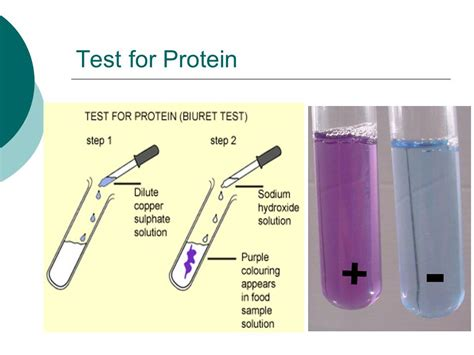 protein test chemical tests for glucose starch proteins and fats
