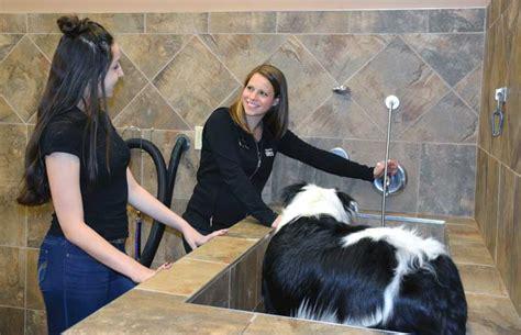 pet valu wash becoming pet experts with pet valu canadian business franchisecanadian business