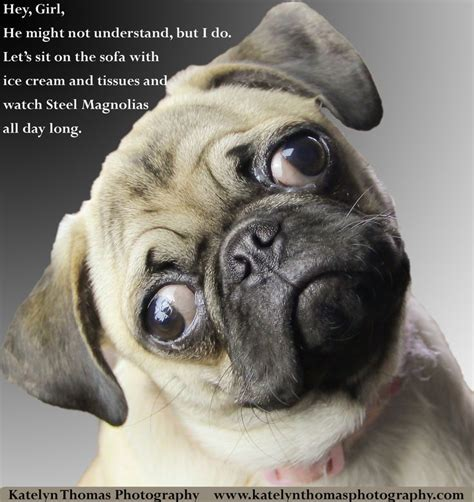Pugs Meme - related keywords suggestions for happy pug meme