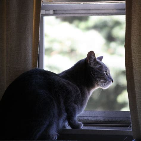 looking out window cat looking out window picture free photograph photos domain