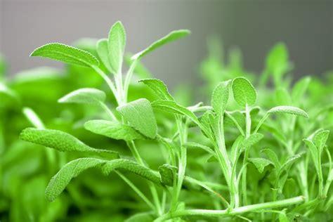 cura delle in vaso cura delle piante in vaso pollicegreen
