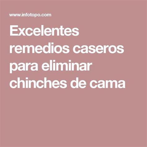 eliminar chinches cama 25 best ideas about como eliminar chinches on