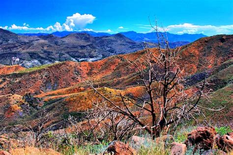 fall colors in arizona fall colors in arizona s tonto national forest the